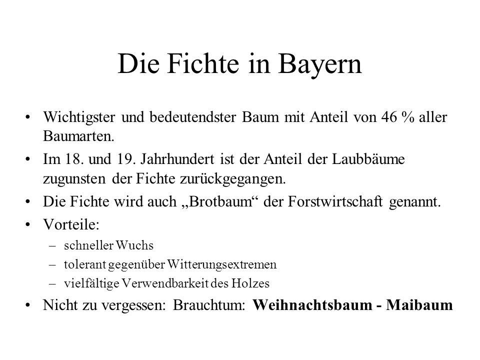 Die Fichte in Bayern Wichtigster und bedeutendster Baum mit Anteil von 46 % aller Baumarten. Im 18. und 19. Jahrhundert ist der Anteil der Laubbäume z