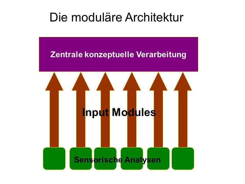 Input-Module Verantwortlich für Wahrnehmung: vergleichen sensorischen Input mit gespeicherten Repräsentationen Beispiele: visuelle Objekterkennung, auditive Worterkennung