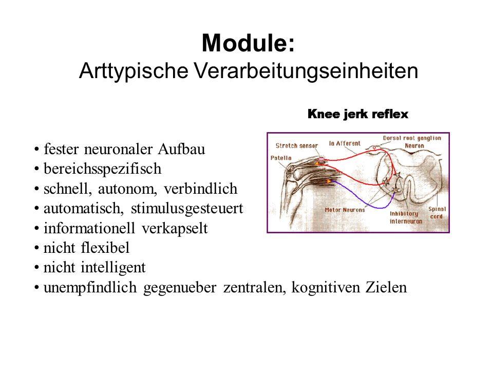 Module: Arttypische Verarbeitungseinheiten fester neuronaler Aufbau bereichsspezifisch schnell, autonom, verbindlich automatisch, stimulusgesteuert in