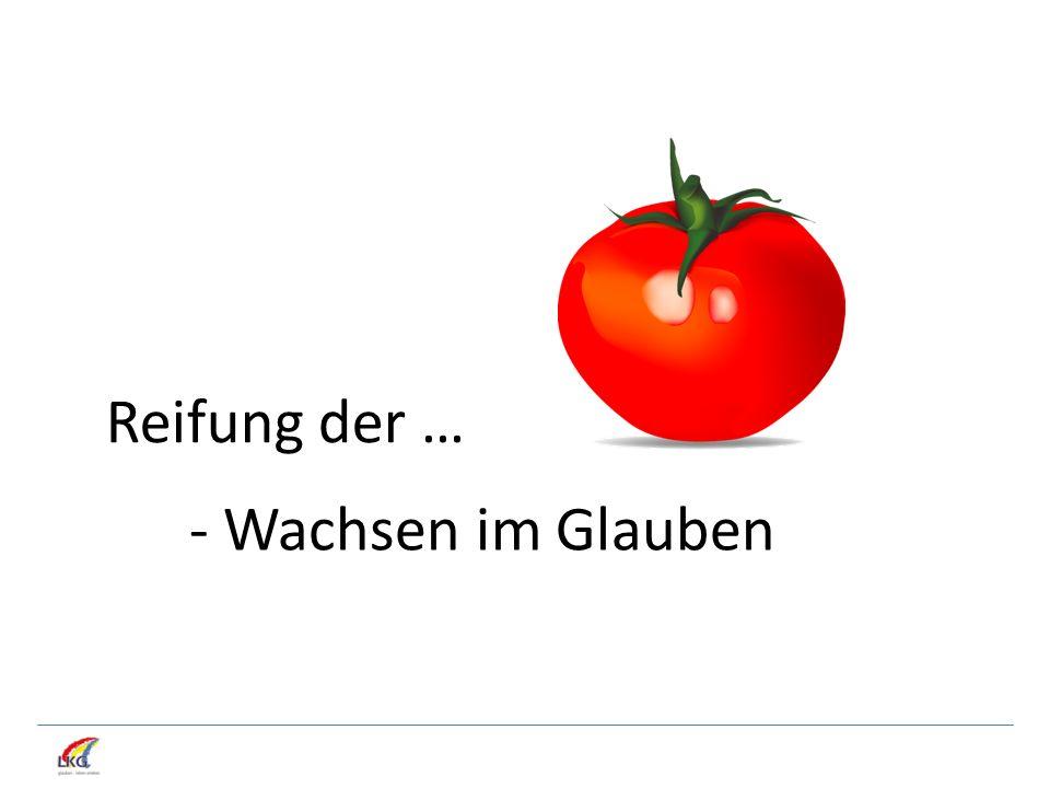 2.Wie wird die Tomate reif.