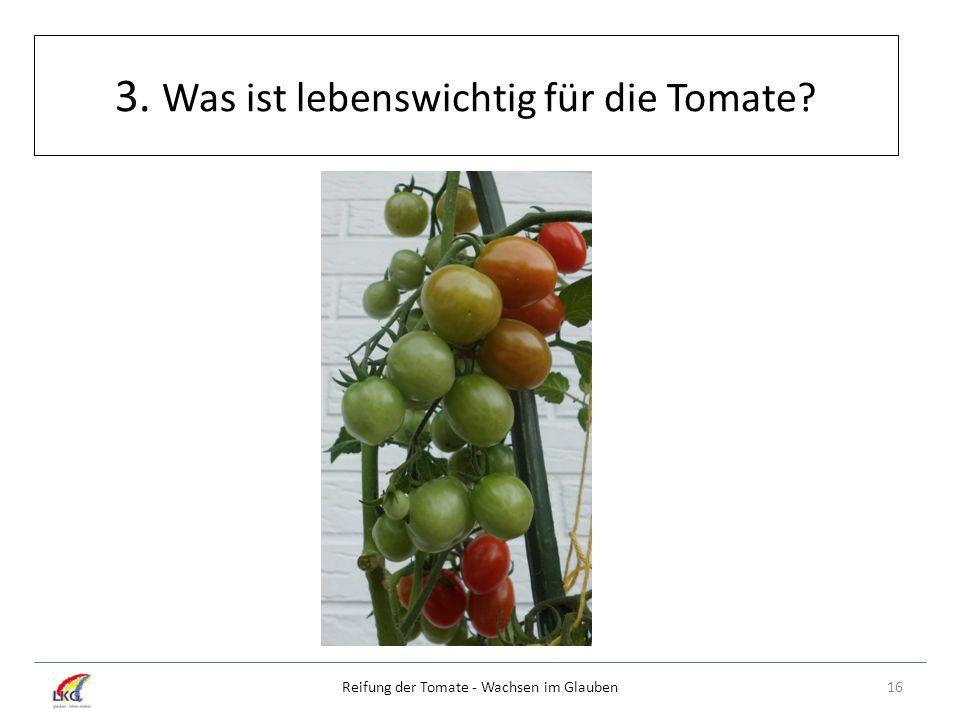 3. Was ist lebenswichtig für die Tomate? 16Reifung der Tomate - Wachsen im Glauben
