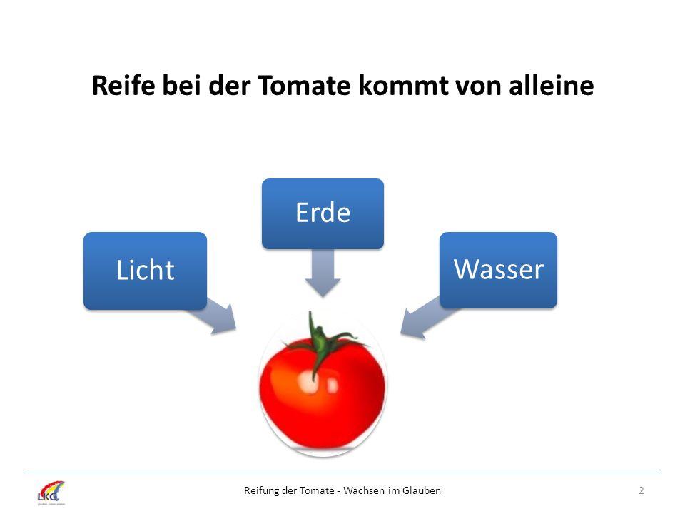 Reife bei der Tomate kommt von alleine Licht Erde Wasser 2Reifung der Tomate - Wachsen im Glauben