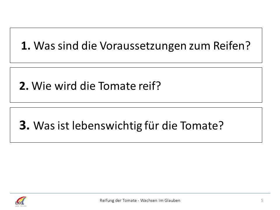 5Reifung der Tomate - Wachsen im Glauben 1. Was sind die Voraussetzungen zum Reifen? 2. Wie wird die Tomate reif? 3. Was ist lebenswichtig für die Tom