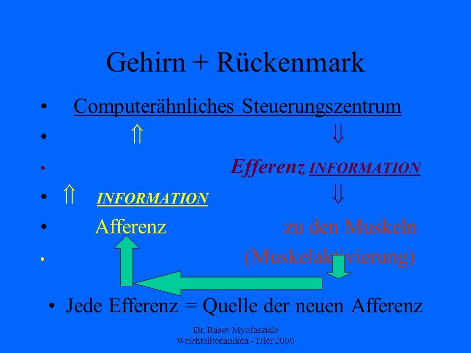 Dr. Rasev Myofasziale Weichteiltechniken - Trier 2000 Gehirn + Rückenmark Computerähnliches Steuerungszentrum Efferenz INFORMATION INFORMATION Afferen