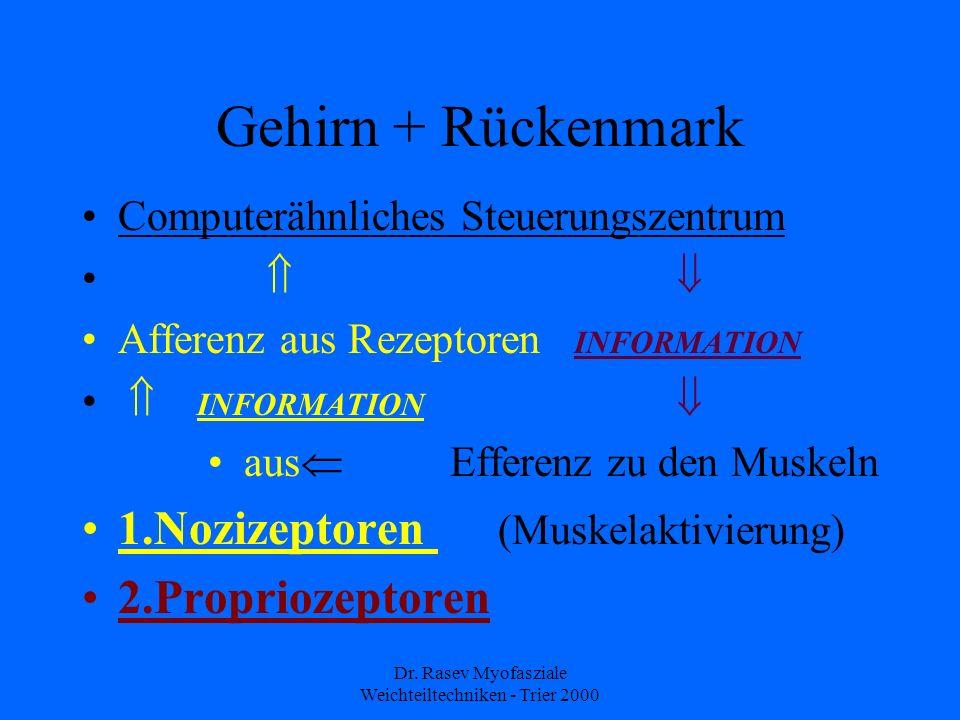 Dr. Rasev Myofasziale Weichteiltechniken - Trier 2000 Gehirn + Rückenmark Computerähnliches Steuerungszentrum Afferenz aus Rezeptoren INFORMATION INFO