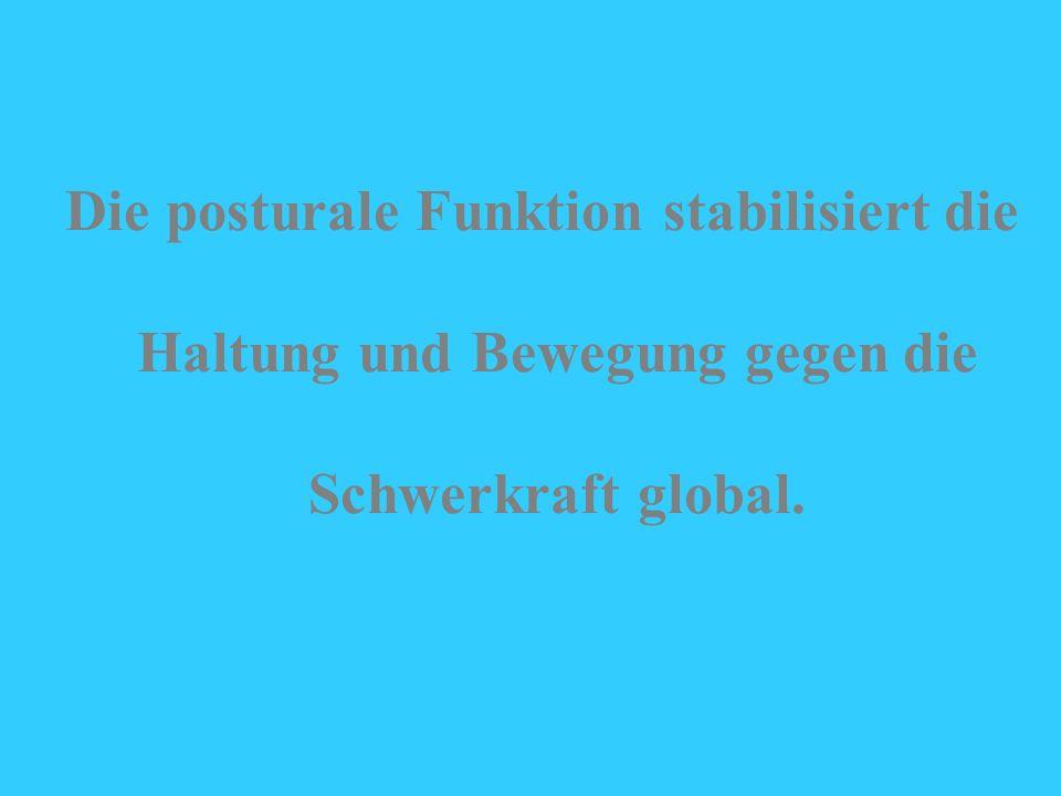 Dr. Rasev Myofasziale Weichteiltechniken - Trier 2000 Die posturale Funktion stabilisiert die Haltung und Bewegung gegen die Schwerkraft global.