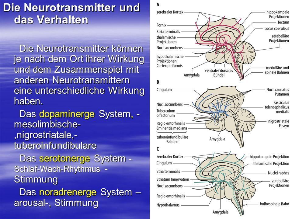 Die Neurotransmitter und das Verhalten Die Neurotransmitter können je nach dem Ort ihrer Wirkung und dem Zusammenspiel mit anderen Neurotransmittern e