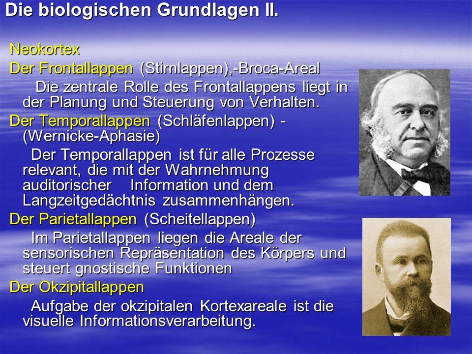 Die biologischen Grundlagen II. Neokortex Neokortex Der Frontallappen (Stirnlappen),-Broca-Areal Der Frontallappen (Stirnlappen),-Broca-Areal Die zent
