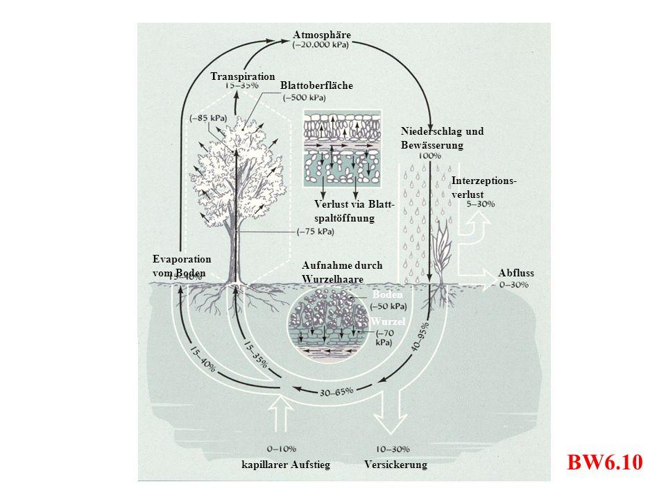 BW6.10 Verlust via Blatt- spaltöffnung Versickerungkapillarer Aufstieg Boden Niederschlag und Bewässerung Interzeptions- verlust Abfluss Atmosphäre Bl