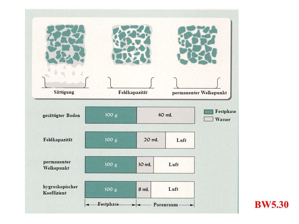 Luft Festphase Wasser Sättigung Feldkapazität permanenter Welkepunkt gesättigter Boden permanenter Welkepunkt Feldkapazität hygroskopischer Koeffizien