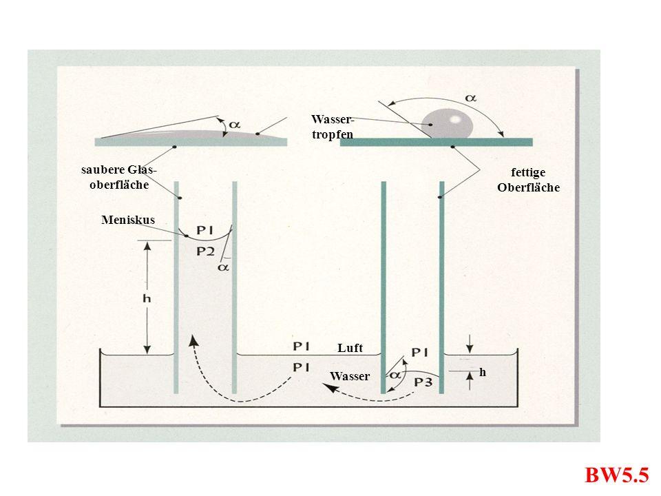 BW5.5 Wasser- tropfen saubere Glas- oberfläche Meniskus fettige Oberfläche Wasser Luft h
