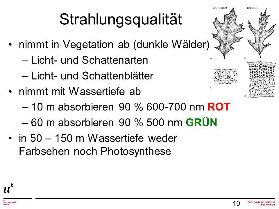 Strahlungsqualität 10 nimmt in Vegetation ab (dunkle Wälder) –Licht- und Schattenarten –Licht- und Schattenblätter nimmt mit Wassertiefe ab –10 m absorbieren 90 % 600-700 nm ROT –60 m absorbieren 90 % 500 nm GRÜN in 50 – 150 m Wassertiefe weder Farbsehen noch Photosynthese