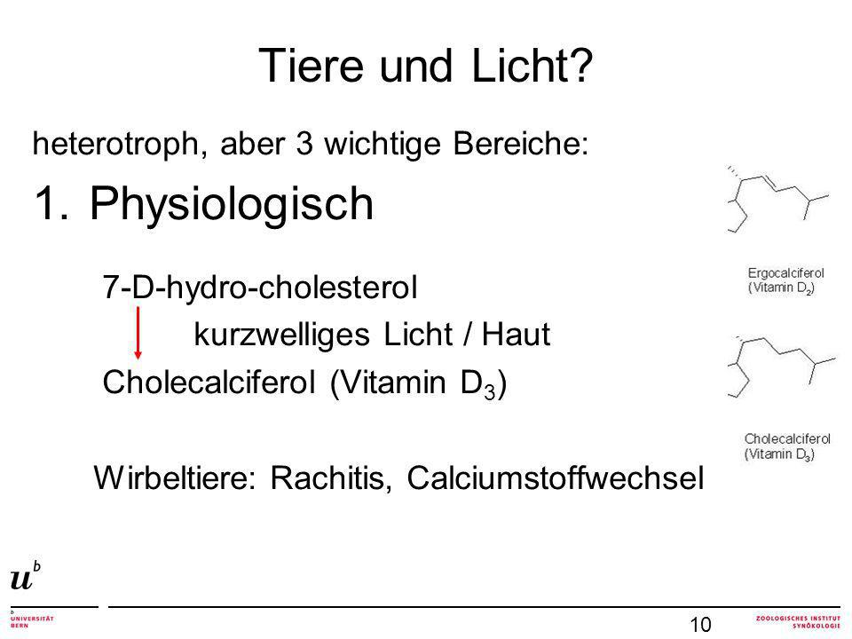 Tiere und Licht? heterotroph, aber 3 wichtige Bereiche: 1.Physiologisch 7-D-hydro-cholesterol kurzwelliges Licht / Haut Cholecalciferol (Vitamin D 3 )