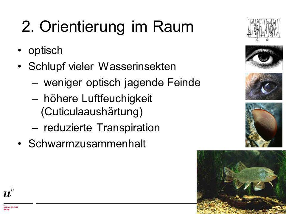 2. Orientierung im Raum optisch Schlupf vieler Wasserinsekten – weniger optisch jagende Feinde – höhere Luftfeuchigkeit (Cuticulaaushärtung) – reduzie