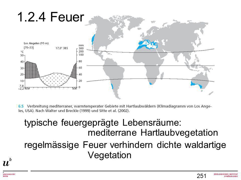 1.2.4 Feuer typische feuergeprägte Lebensräume: mediterrane Hartlaubvegetation regelmässige Feuer verhindern dichte waldartige Vegetation 251