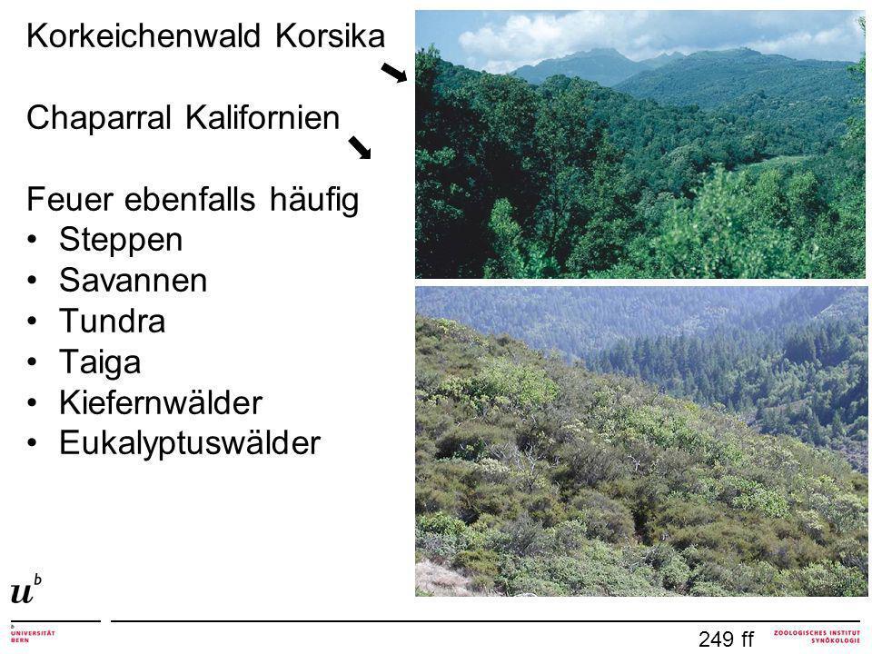 Korkeichenwald Korsika Chaparral Kalifornien Feuer ebenfalls häufig Steppen Savannen Tundra Taiga Kiefernwälder Eukalyptuswälder 249 ff