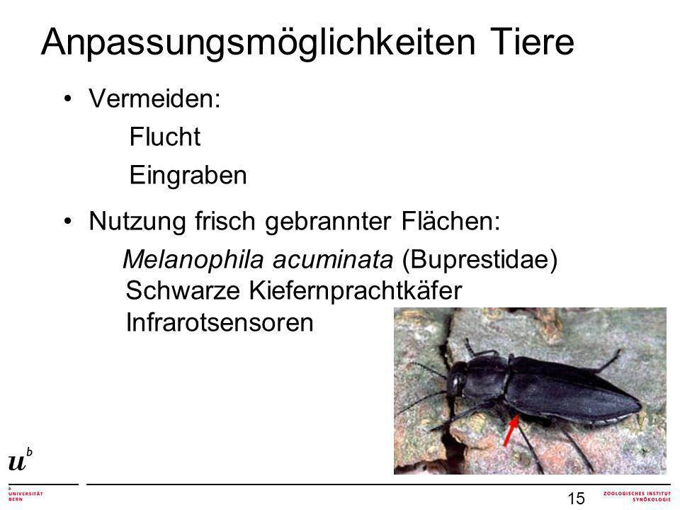 Anpassungsmöglichkeiten Tiere Vermeiden: Flucht Eingraben Nutzung frisch gebrannter Flächen: Melanophila acuminata (Buprestidae) Schwarze Kiefernprachtkäfer Infrarotsensoren 15