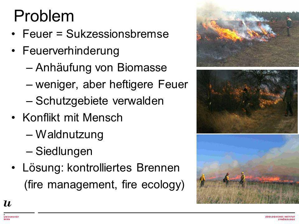 Problem Feuer = Sukzessionsbremse Feuerverhinderung –Anhäufung von Biomasse –weniger, aber heftigere Feuer –Schutzgebiete verwalden Konflikt mit Mensch –Waldnutzung –Siedlungen Lösung: kontrolliertes Brennen (fire management, fire ecology)
