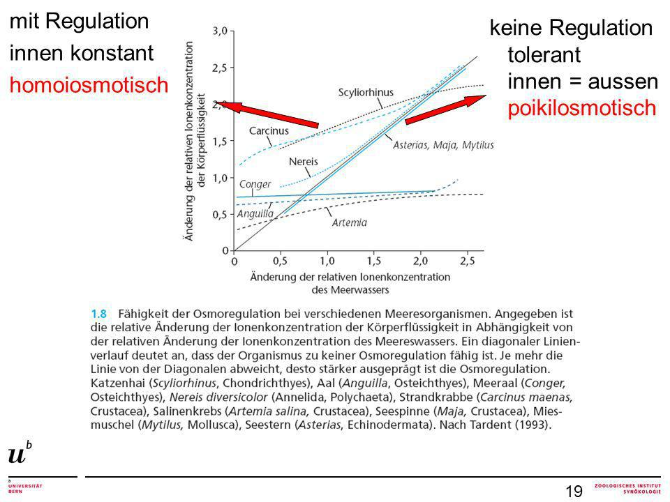 mit Regulation innen konstant homoiosmotisch 19 keine Regulation tolerant innen = aussen poikilosmotisch