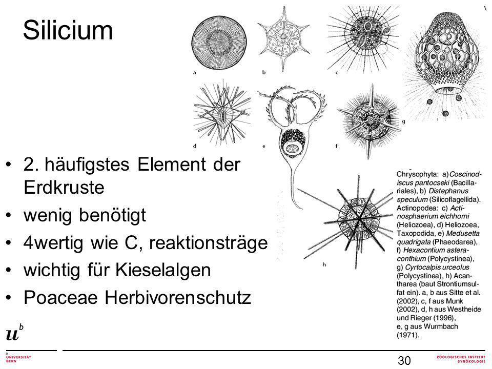 Silicium 2. häufigstes Element der Erdkruste wenig benötigt 4wertig wie C, reaktionsträge wichtig für Kieselalgen Poaceae Herbivorenschutz 30