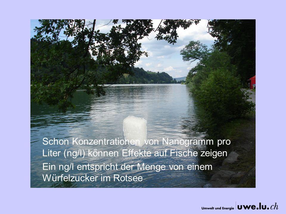 Schon Konzentrationen von Nanogramm pro Liter (ng/l) können Effekte auf Fische zeigen Ein ng/l entspricht der Menge von einem Würfelzucker im Rotsee