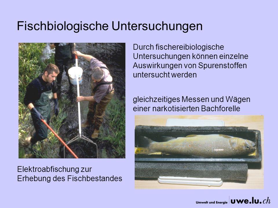 Fischbiologische Untersuchungen Elektroabfischung zur Erhebung des Fischbestandes gleichzeitiges Messen und Wägen einer narkotisierten Bachforelle Durch fischereibiologische Untersuchungen können einzelne Auswirkungen von Spurenstoffen untersucht werden