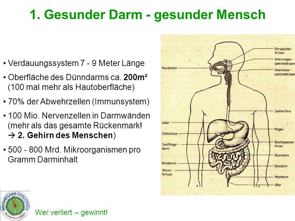 Wer verliert – gewinnt! 1. Gesunder Darm - gesunder Mensch Verdauungssystem 7 - 9 Meter Länge Oberfläche des Dünndarms ca. 200m² (100 mal mehr als Hau