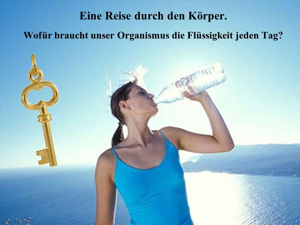 Eine Reise durch den Körper. Wofür braucht unser Organismus die Flüssigkeit jeden Tag?