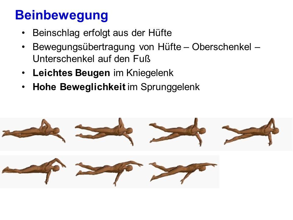 Beinbewegung Beinschlag erfolgt aus der Hüfte Bewegungsübertragung von Hüfte – Oberschenkel – Unterschenkel auf den Fuß Leichtes Beugen im Kniegelenk