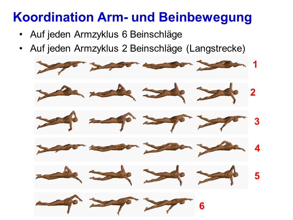 Koordination Arm- und Beinbewegung Auf jeden Armzyklus 6 Beinschläge Auf jeden Armzyklus 2 Beinschläge (Langstrecke) 1 2 3 4 5 6