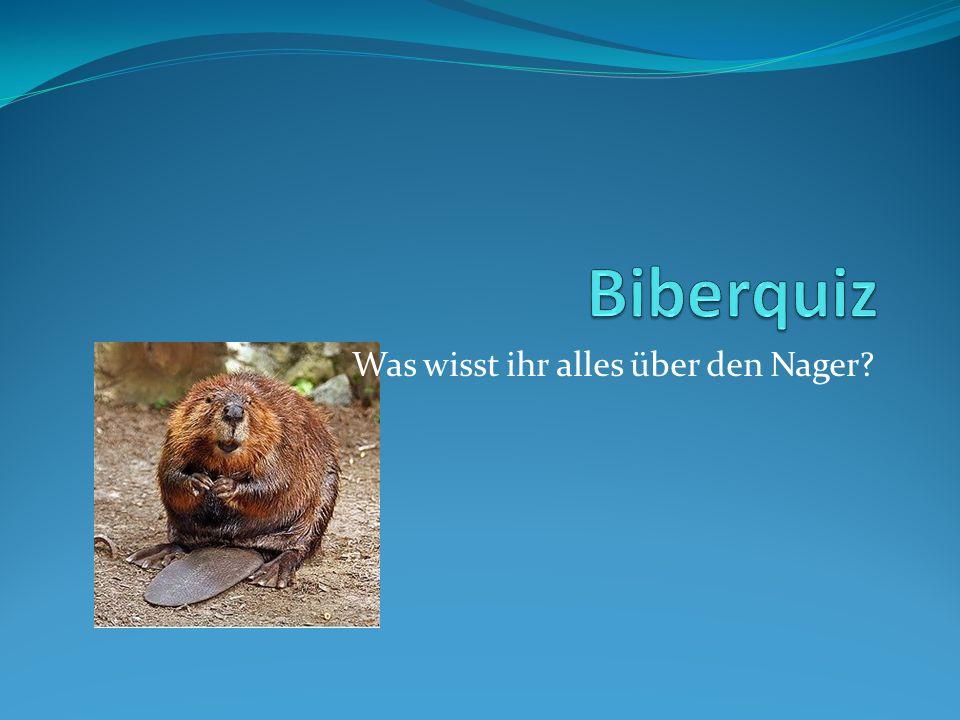 Der Biber ist… …das kleinste Nagetier auf der Welt … das zweitgrösste Nagetier auf der Welt