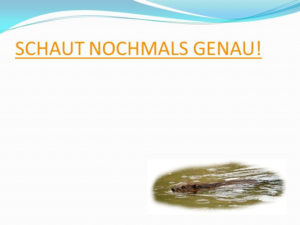 SCHAUT NOCHMALS GENAU!
