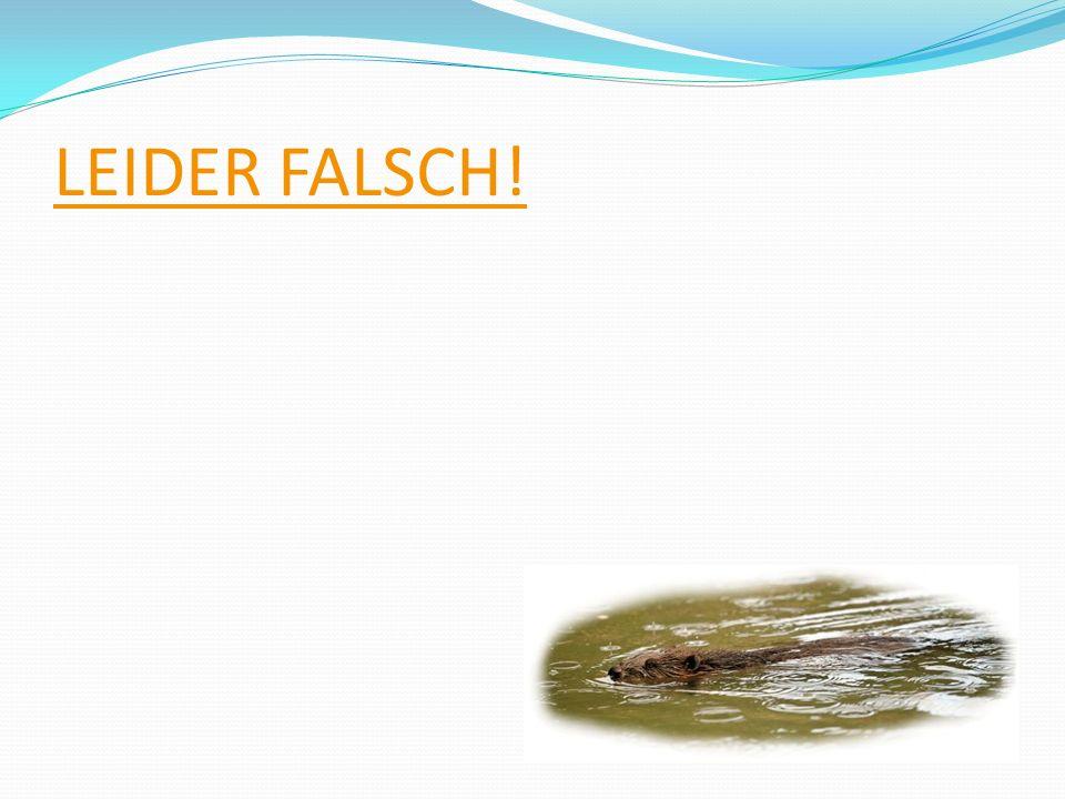 LEIDER FALSCH!