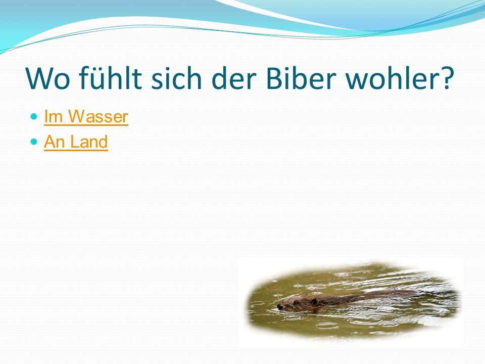 Wo fühlt sich der Biber wohler? Im Wasser An Land