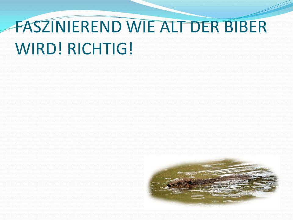 FASZINIEREND WIE ALT DER BIBER WIRD! RICHTIG!