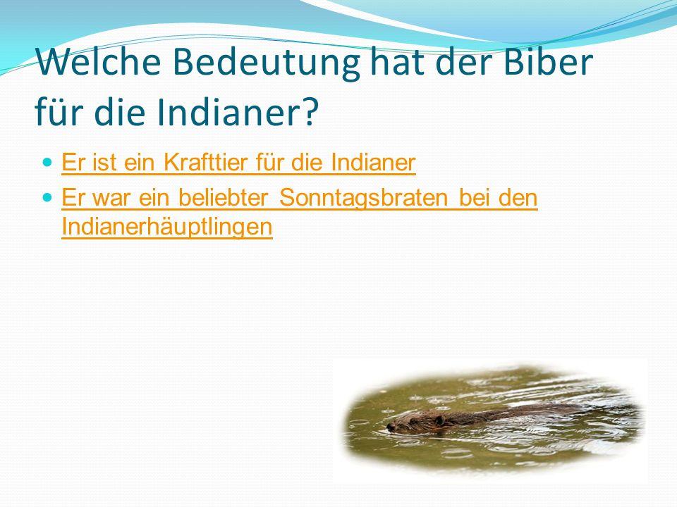 Welche Bedeutung hat der Biber für die Indianer? Er ist ein Krafttier für die Indianer Er war ein beliebter Sonntagsbraten bei den Indianerhäuptlingen