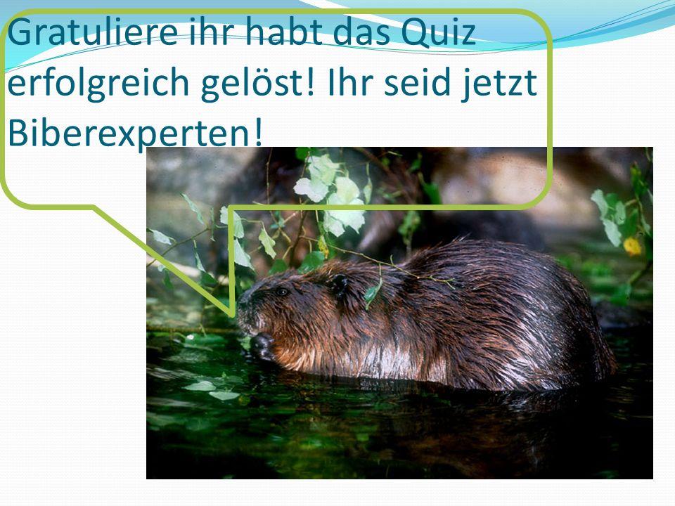 Gratuliere ihr habt das Quiz erfolgreich gelöst! Ihr seid jetzt Biberexperten!