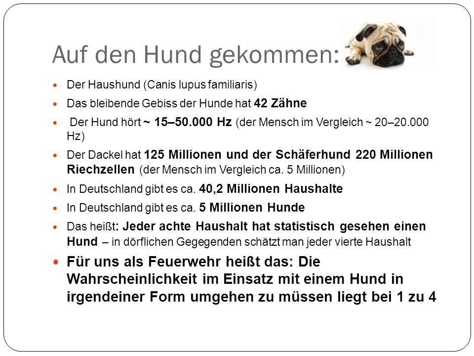 Auf den Hund gekommen: Der Haushund (Canis lupus familiaris) Das bleibende Gebiss der Hunde hat 42 Zähne Der Hund hört ~ 15–50.000 Hz (der Mensch im V
