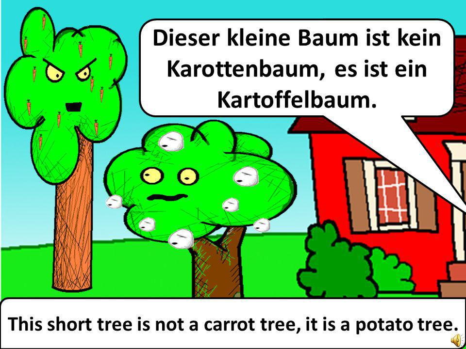 This short tree is not a carrot tree, it is a potato tree.