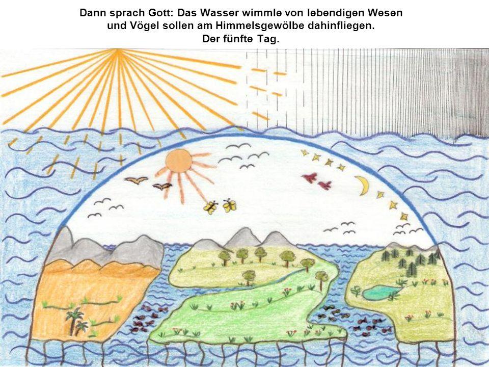 Dann sprach Gott: Das Wasser wimmle von lebendigen Wesen und Vögel sollen am Himmelsgewölbe dahinfliegen. Der fünfte Tag.