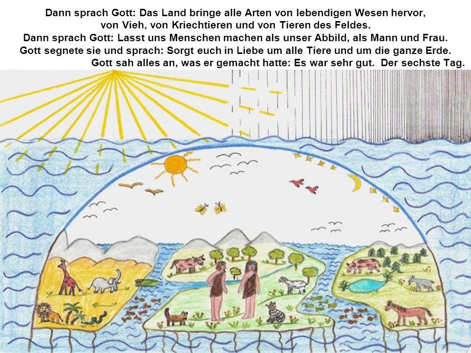 Dann sprach Gott: Das Land bringe alle Arten von lebendigen Wesen hervor, von Vieh, von Kriechtieren und von Tieren des Feldes. Dann sprach Gott: Lass