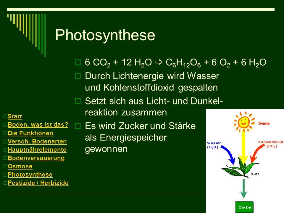 Photosynthese 6 CO 2 + 12 H 2 O C 6 H 12 O 6 + 6 O 2 + 6 H 2 O Durch Lichtenergie wird Wasser und Kohlenstoffdioxid gespalten Setzt sich aus Licht- un
