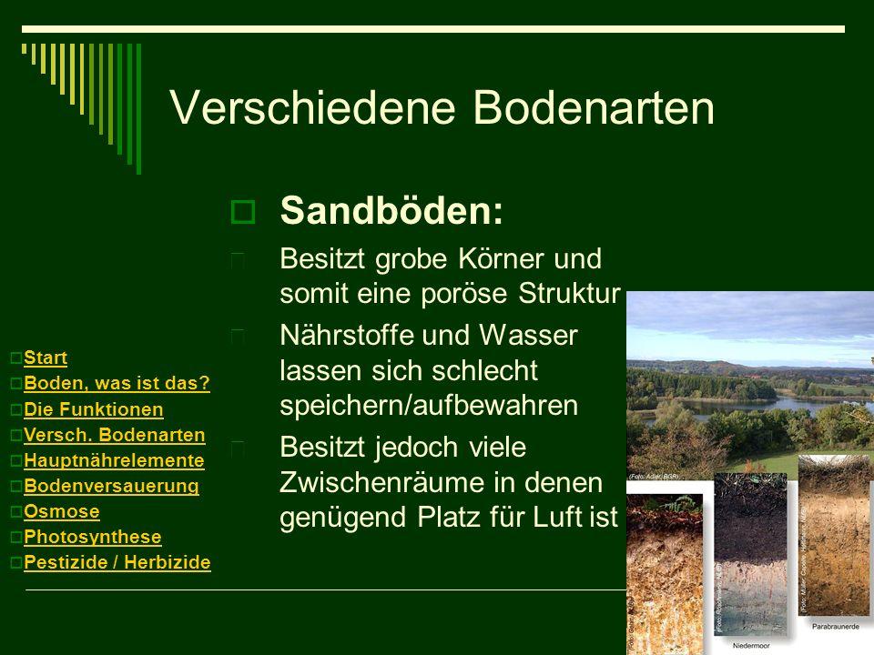Verschiedene Bodenarten Sandböden:  Besitzt grobe Körner und somit eine poröse Struktur  Nährstoffe und Wasser lassen sich schlecht speichern/aufbew