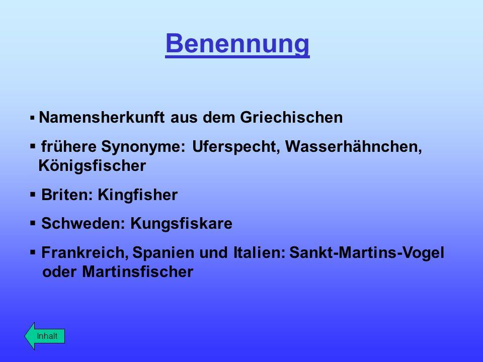 Benennung Namensherkunft aus dem Griechischen frühere Synonyme: Uferspecht, Wasserhähnchen, Königsfischer Briten: Kingfisher Schweden: Kungsfiskare Fr