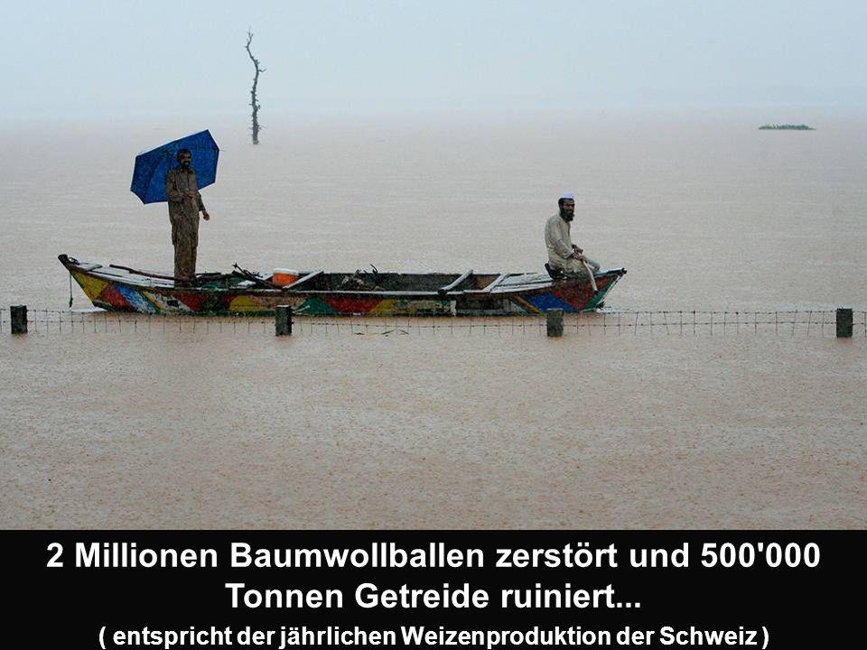 2 Millionen Baumwollballen zerstört und 500 000 Tonnen Getreide ruiniert...