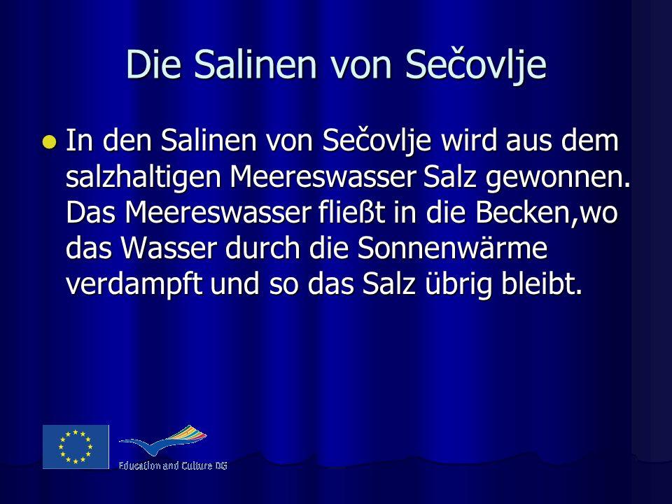Die Salinen von Sečovlje In den Salinen von Sečovlje wird aus dem salzhaltigen Meereswasser Salz gewonnen. Das Meereswasser fließt in die Becken,wo da