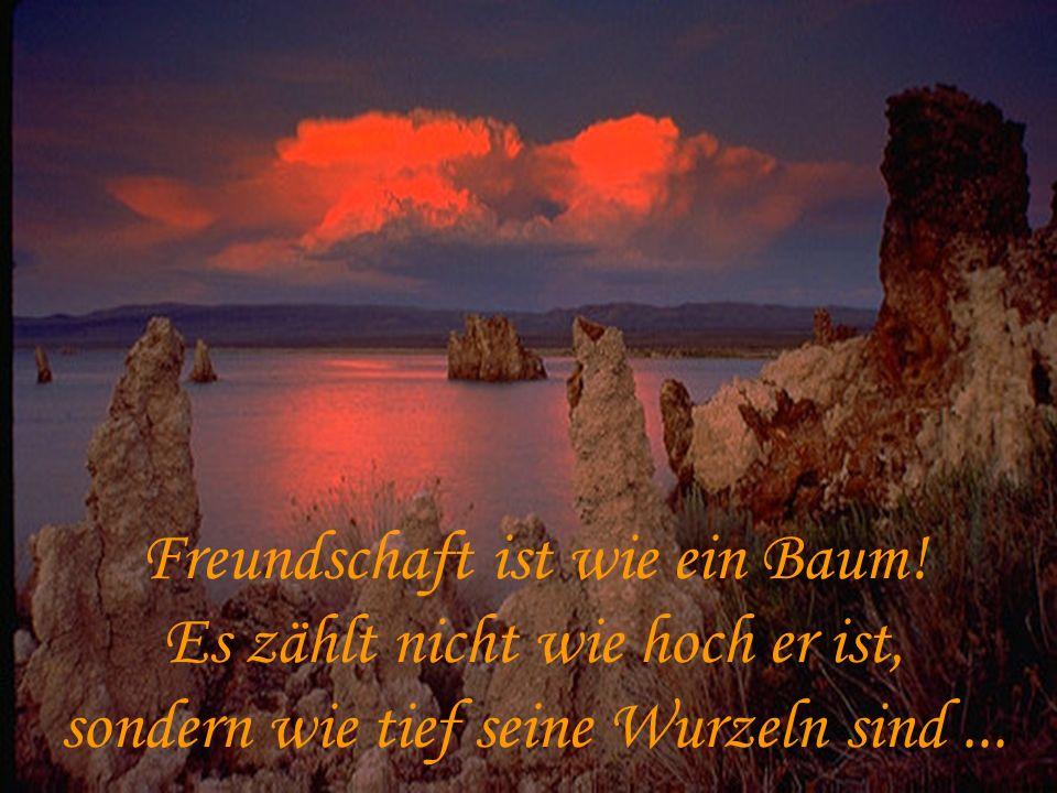 Freundschaft ist wie ein Baum! Es zählt nicht wie hoch er ist, sondern wie tief seine Wurzeln sind...