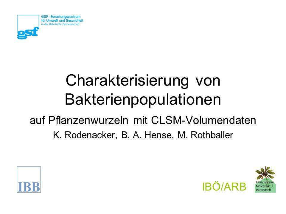 Charakterisierung von Bakterienpopulationen auf Pflanzenwurzeln mit CLSM-Volumendaten K.