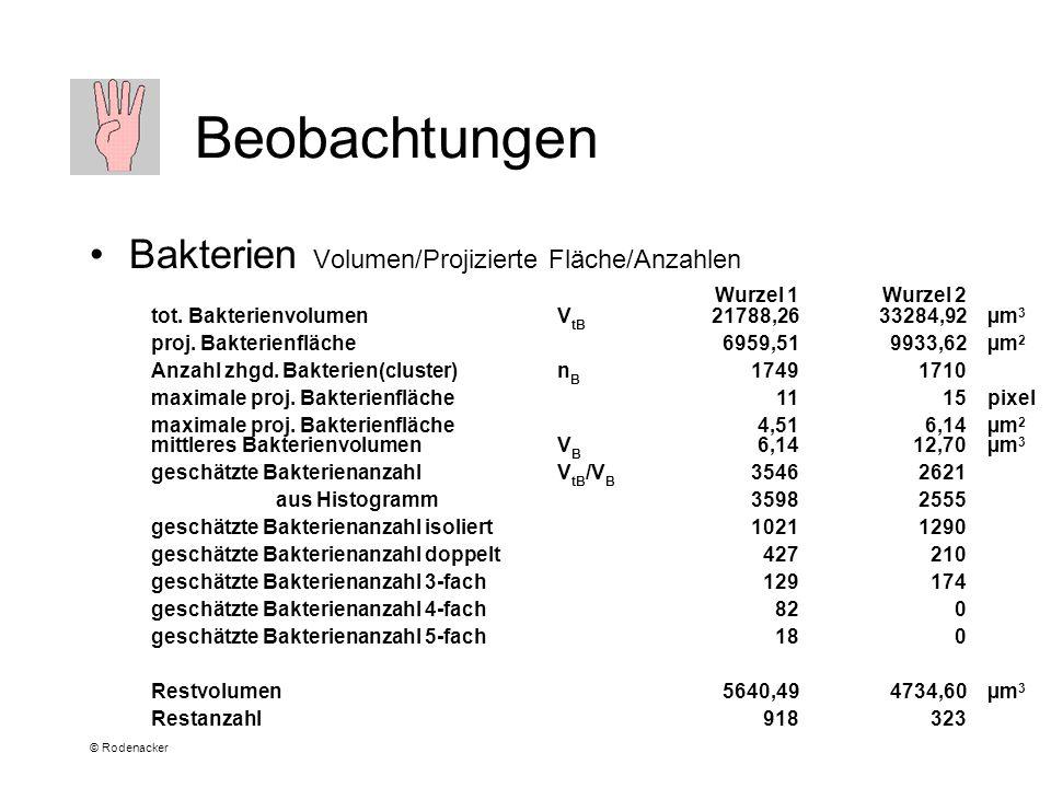 © Rodenacker Beobachtungen Bakterien Volumen/Projizierte Fläche/Anzahlen Wurzel 1Wurzel 2 tot.