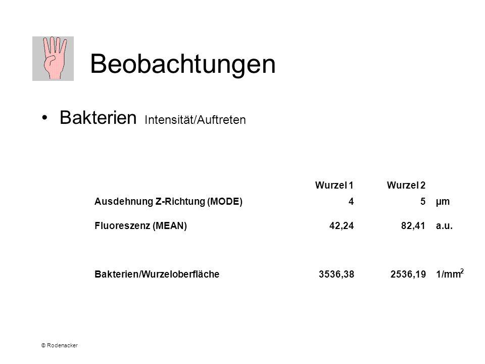 © Rodenacker Beobachtungen Bakterien Intensität/Auftreten Wurzel 1Wurzel 2 Ausdehnung Z-Richtung (MODE)45µm Fluoreszenz (MEAN)42,2482,41a.u.